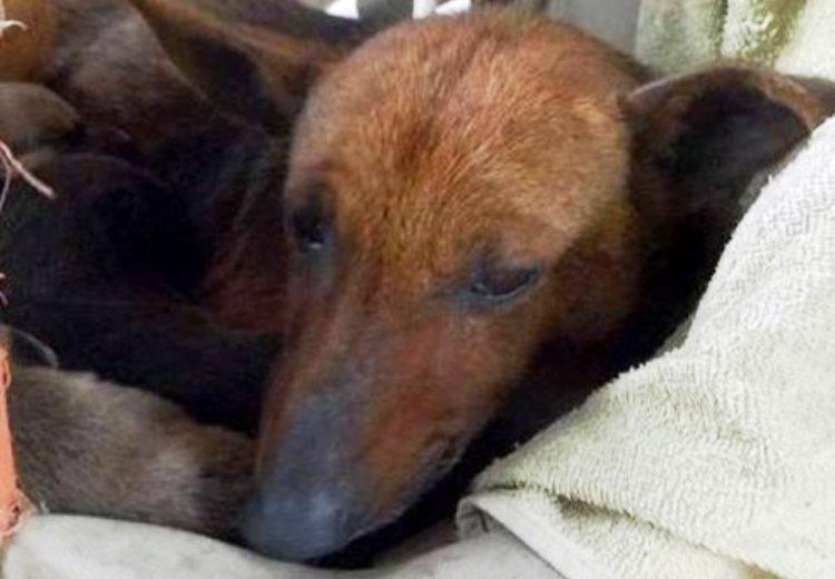 Una perra salva a bebé abandonado de morir en Argentina