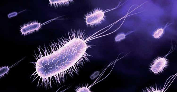 Superbacterias podrían traer un escenario apocalíptico