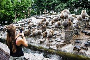 Apatía Misteriosa: monos en huelga en Zoológico holandés