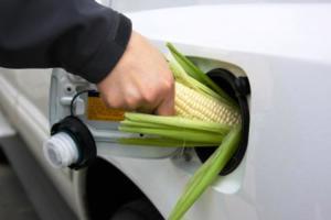 ¿Cómo multiplicar $1 en $3? – oro dorado - Bioetanol de maíz -