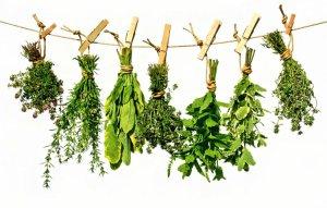 Plantas medicinales en la Biblia