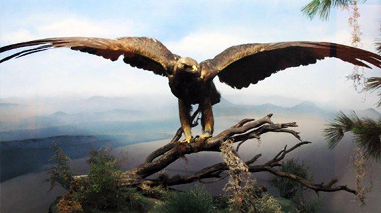 Simbología de las aves en la Bíblia