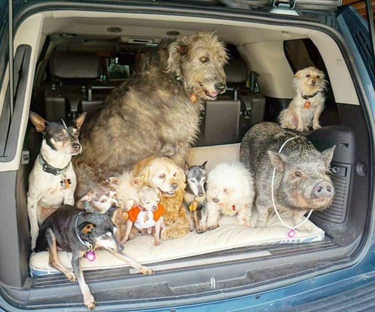 Ha dedicado su vida a la adopción de perros viejos