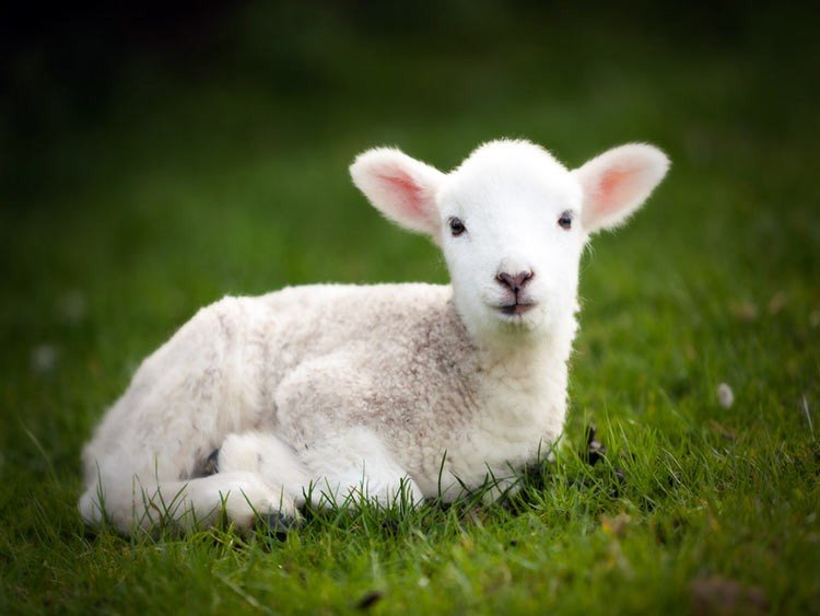 Por qué celebramos Pascua