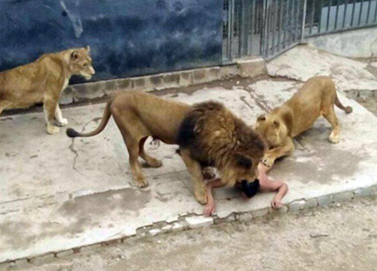 Salta a los leones bajo delirio mesiánico