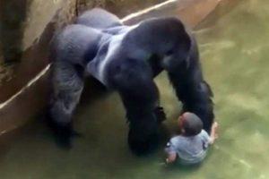 Madre del bebé que cayó en la jaula de los gorilas