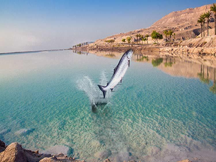 El Mar Muerto está dando señales de vida