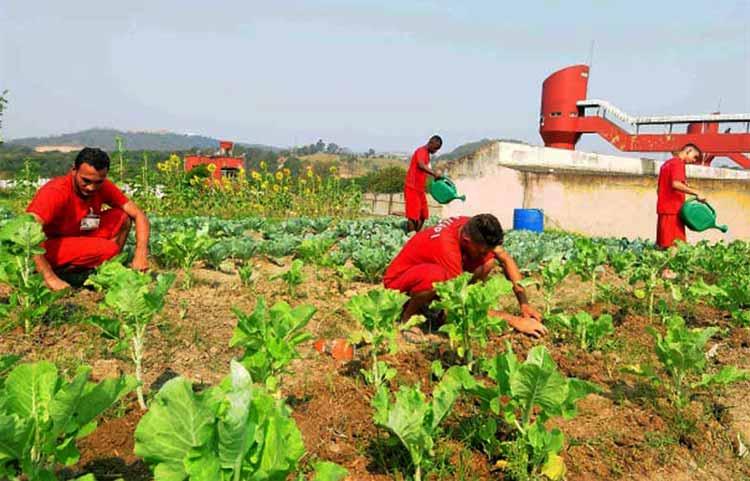 Tras las rejas producen vegetales para donaciones