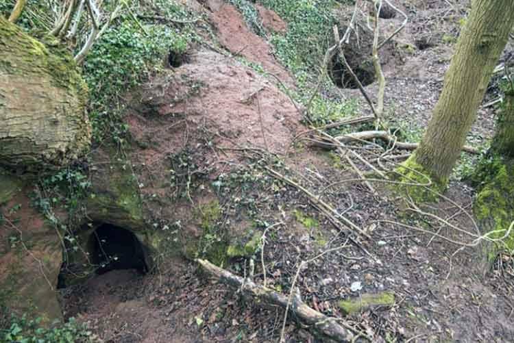 Por un conejo descubren cueva de los templarios