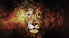 Ante ataque terrorista oran y son librados por leones