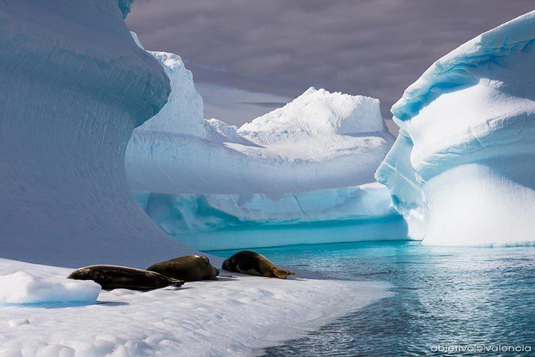 Descubrimiento en Antártida corrobora el diluvio bíblico
