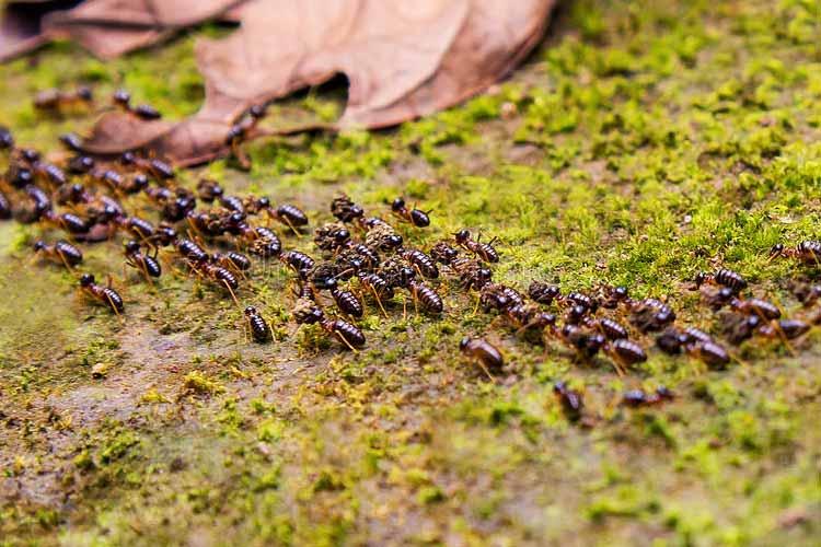 Comportamiento de las hormigas – Configuradas desde antes de la fundación del mundo